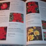 Libri sui fiori: dal giardinaggio al linguaggio
