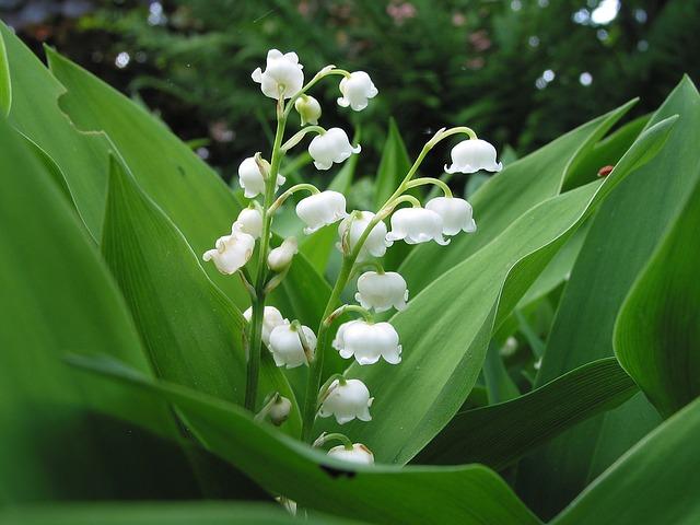 Famoso Le piante che Amano l'Ombra: quali sono e come coltivarle ES35