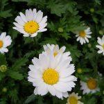 Le piante mese per mese Aprile e Maggio
