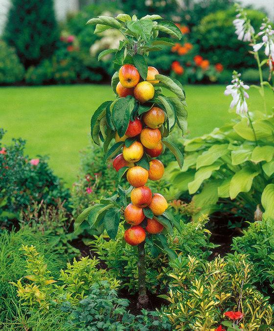 Come coltivare gli alberi da frutto in vaso for Piante da frutto nane in vaso