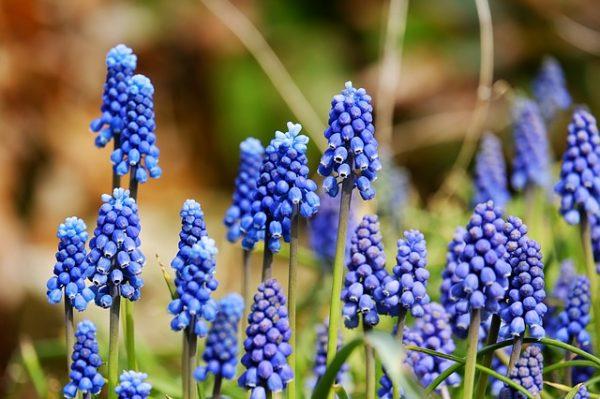 Nomi Fiori Viola.Piante Con Fiori Blu