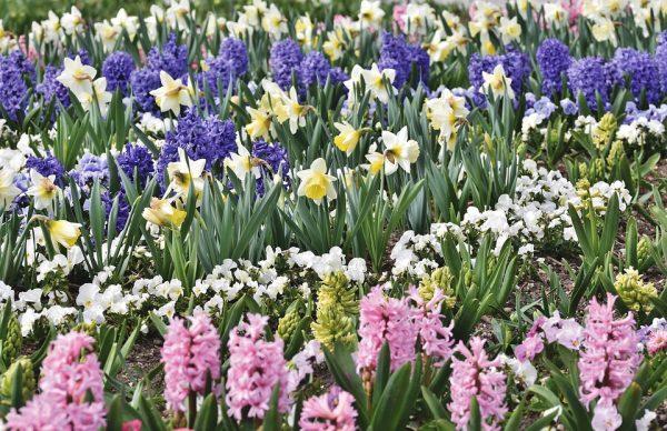 fiori a marzo