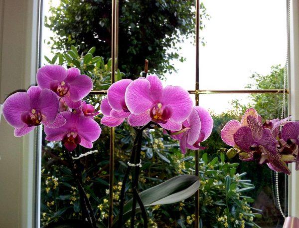di quanta luce hanno bisogno le orchidee