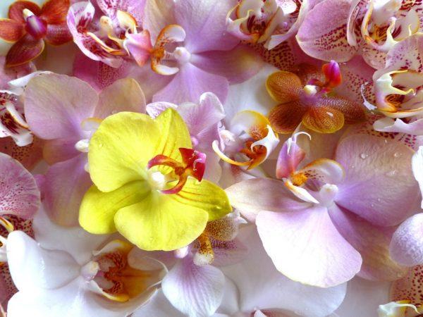 Di seta Red In vaso di ceramica Alicemall 56/cm Finta orchidea Phalaenopsis