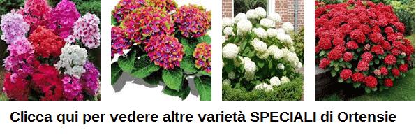 Varietà speciali di Ortensie