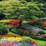 La passione per il giardinaggio di Sami Vignozzi