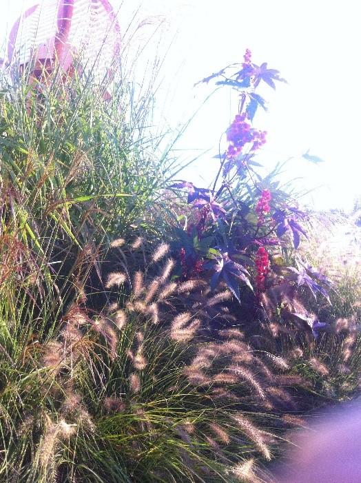 piante giardinaggio