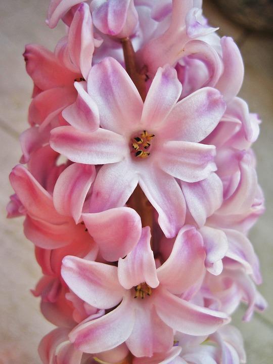 giacinto rosa