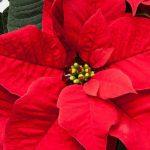 Le piante a Dicembre, consigli per la cura