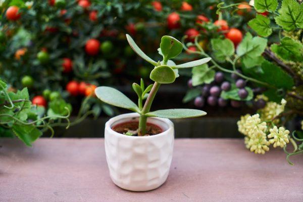 come pulire le piante più delicate e dalle piccole foglie
