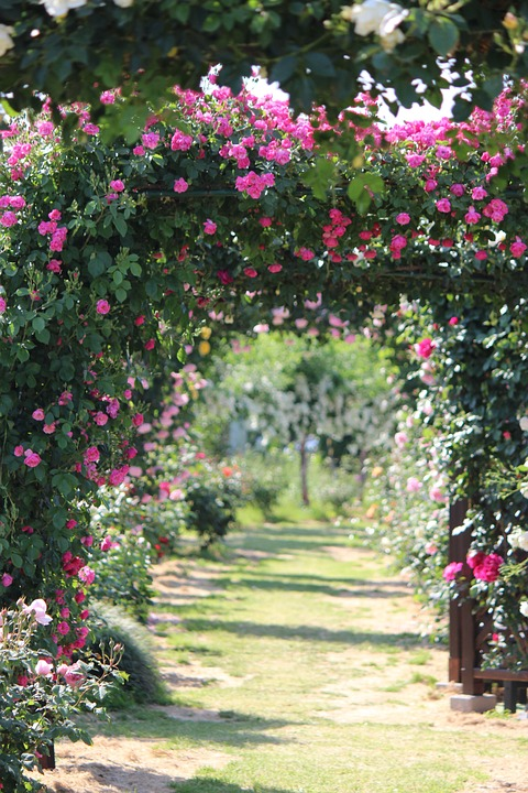 rose-garden-610713_960_720