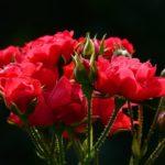 Quali fiori regalare ad un uomo?
