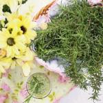 Libri sulle Piante Officinali: curare le piante per curare sè stessi