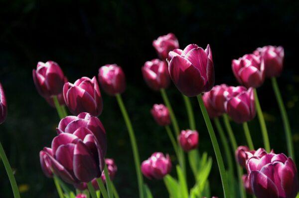 spring-108810_960_720
