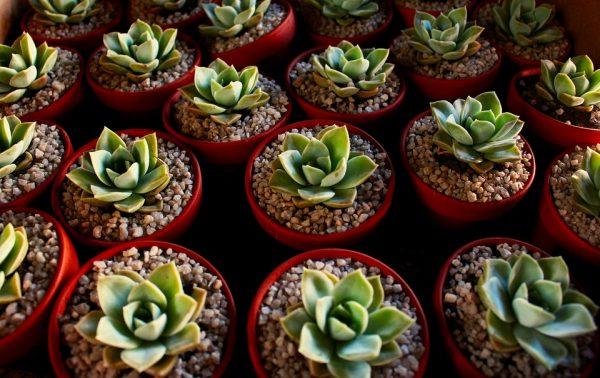 Parlare alle piante per farle crescere bene