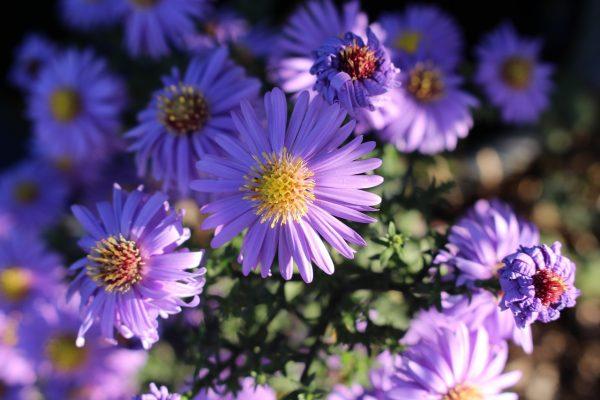 Cosa fiorisce a ottobre?